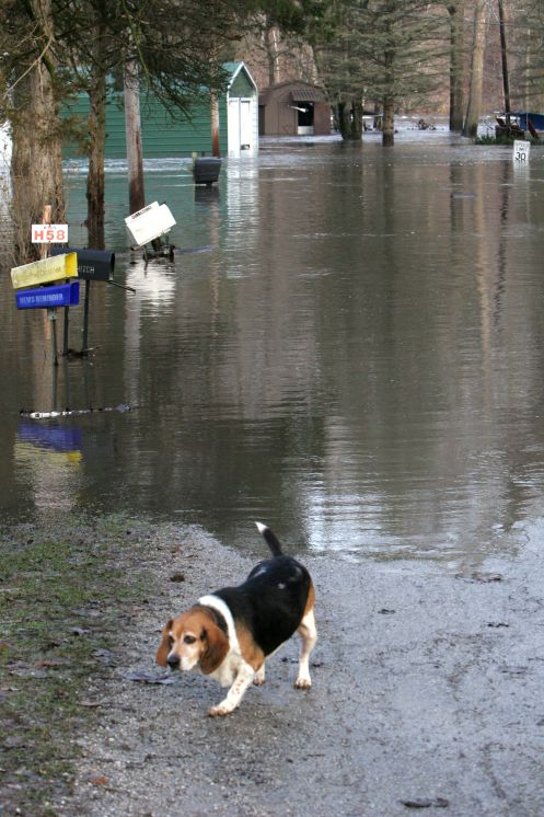 DOG STRANDED DURING WHITE COUNTY FLOOD OF 2008